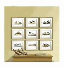 Beach Coastal Decor Wall Art Set of 9 Sea Birds of America Audubon Repro Prints