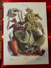 Ancienne affiche 34x49 cm légume d'autrefois Vilmorin Pois téléphone Arroche