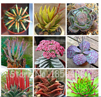 100 Seeds Plants Aloe Seeds Haworthia Plant Houseplants Succulent Aloe Vera