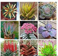 100 Seeds Plants Aloe Seeds Haworthia Plant Houseplants Succulent Aloe Vera