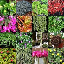 40 Mix Hanging Basket Succulent Cuttings 40 Pots Drought Hardy Plants Succulents