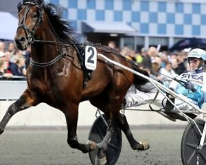 PROPULSION 8X10 PHOTO HARNESS HORSE RACING PICTURE