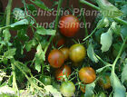 Tumbling Red Striped Colgantes Tomate 10 Semillas VARIEDAD antigua Balcón OLLA