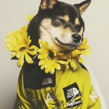 Dog Raincoat Jacket Clothes Windproof Cat Dog Jacket Fashion Waterproof