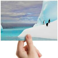 "Penguin Iceberg Antarctica Small Photograph 6"" x 4"" Art Print Photo Gift #13281"