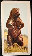 North American  GRIZZLY BEAR    Superb Illustrated Card  # VGC