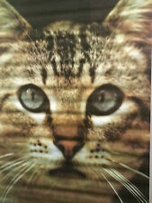 original vintage poster cat face studio one Ed Simpson 1970's kitten eyes photo