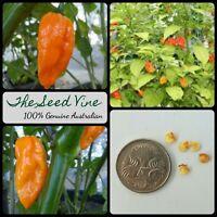 20+ NAGA VIPER ORANGE CHILLI SEEDS (Capsicum chinense) Hot Edible NON-GMO