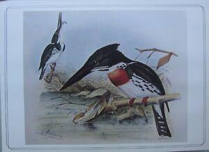 BEAUTIFUL BIRD PRINT ~ AMAZON KINGFISHER ~ JOSEPH GERRARD KEULEMANS