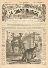 Australia, Kangaroos In The Zoo, Vintage, 1871 French Antique Art Print,