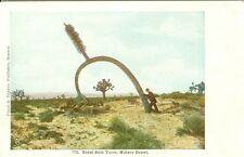 Mohave Desert, CA The Royal Arch Yucca