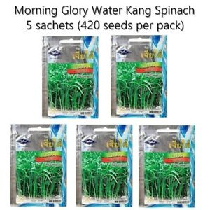 Chia Tai Morning Glory Water Kang Spinach Chinese Convolvulus x 5 sach
