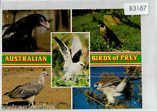 B3187cgt Australia Birds of Prey Multiview postcard