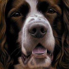 More details for nigel hemming larger than life springer spaniel, art canine ltd edition  #1