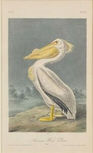 Audubon 1st Ed. Octavo Pl. 422 American White Pelican