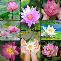 10 Lotus Seeds Mix Color Freshwater Live Aquarium Tropical Plant water lily pond