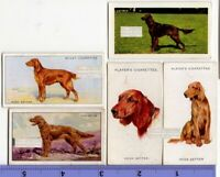 Irish Setter Dogs 5 Different Vintage Ad Trade Cards 2nd