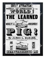 Historic The Learned Pig Advertising Postcard