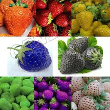 1600x Strawberry Seeds Nutritious Delicious Fruit Berry Garden Yard Giant Sweet