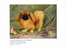 PEKINGESE NAMED DOG ANTIQUE DOG ART PRINT FROM 1907 BY LILIAN CHEVIOT