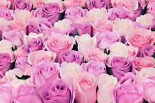 STUNNING PINK ROSE FLOWERS CANVAS #811 QUALITY FRAMED PICTURE A1 WALL ART