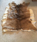 """White Tail Deer Hide, 40"""" Long And 40"""" Wide, Thick Fur"""