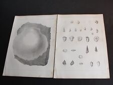 1850's Lithograph Fossil Shells[California] Plate's IX & X-Set of 2 Art Print's.