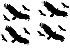 12 Vögel Aufkleber Vogelschutz  Warnvögel  Wintergarten Farbe: Schwarz Matt AN 1