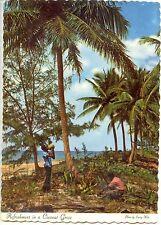 CP Antilles - Guadaloupe - Refreshment in a coconut Grove