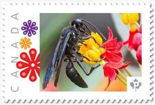 uq. BLACK WASP = Picture Postage stamp MNH-VF Canada 2019 [p19-02sn26]