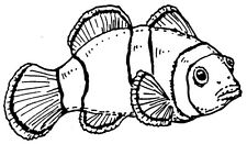 Wood Mounted Rubber Stamps, Crafts, Clown Fish, Nemo Type Fish, Tropical Fish
