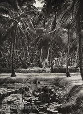 1928 Original INDIA Malabar Coast Coconut Grove Landscape Photo Art By HURLIMANN
