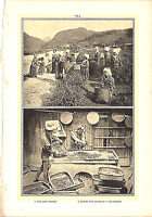 "Rare 1903 Antique Print Picture People Tea Picking and Drying Leaves  10"" X 6"""