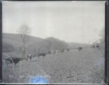 "Antique Vintage Glass Negative ""On The Road To Truro"" Late 1800s 10.5cm x 8cm"