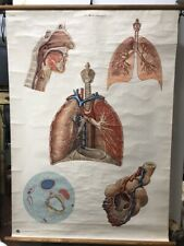 GERMAN MID CENTURY ANATOMICAL WALL CHART