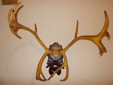 Deer/ Antlers