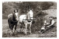 rp16991 - Farm Working Horses taking a rest - photograph 6x4