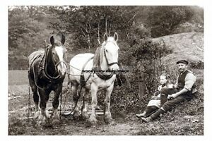 rp16991 - Farm Working Horses taking a rest - print 6x4