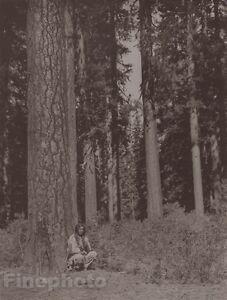 c1900/72 EDWARD CURTIS Native American Indian Klamath Tribe Forest Photo Gravure