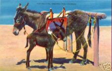 HELLO PAL! Greetings from Colorado ~ Burros ~ LINEN