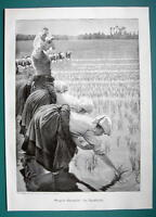 RICE FIELD Young Women Laborers - VICTORIAN Era Print