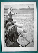 RICE FIELD Young Women Laborers - VICTORIAN Era Print