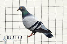 Pigeon/Seagull bird exclusion netting - 50mm sq Mesh - 20m x 20m