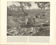 1894 PRINT COOLGARDIE AUSTRALIA GOLD DIGGERS MINING ~ DESCRIPTIVE TEXT