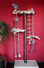 SEDILE liberamente in legno pappagalli liberamente sede Java RADICE LEGNO PAPPAGALLI giocattoli * NUOVO *