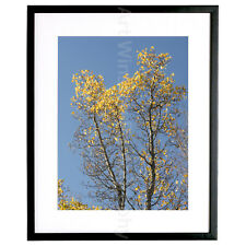"Fine Art Photography Print ""A Statement of Fall"" Limited Edition Archival Paper"