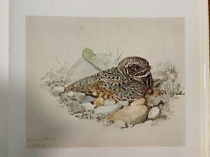 "Louis Agassiz Fuertes & The Singular Beauty of Birds, ""Poorwill"" Print"