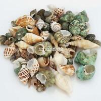 100pcs Small Sea Shells Assorted Natural Seashells Conch Crafts DIY Decoration