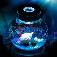 10cm Mini Glass Bottle Jar Hydroponic Terrarium with LED Light Cork Stopper