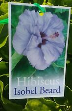 Hibiscus Isobel Beard fully potted in 75mm supergro tubes perennial